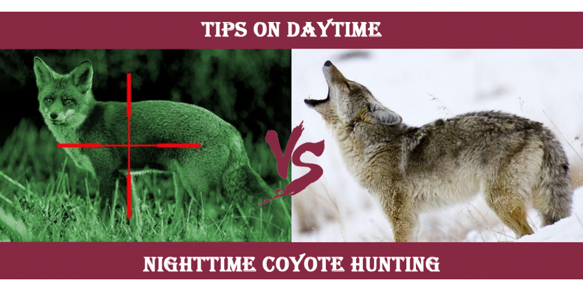 Tips on Daytime vs. Nighttime Coyote Hunting